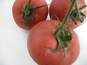 美味しトマト